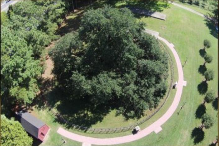 Emancipation Oak Tree.png