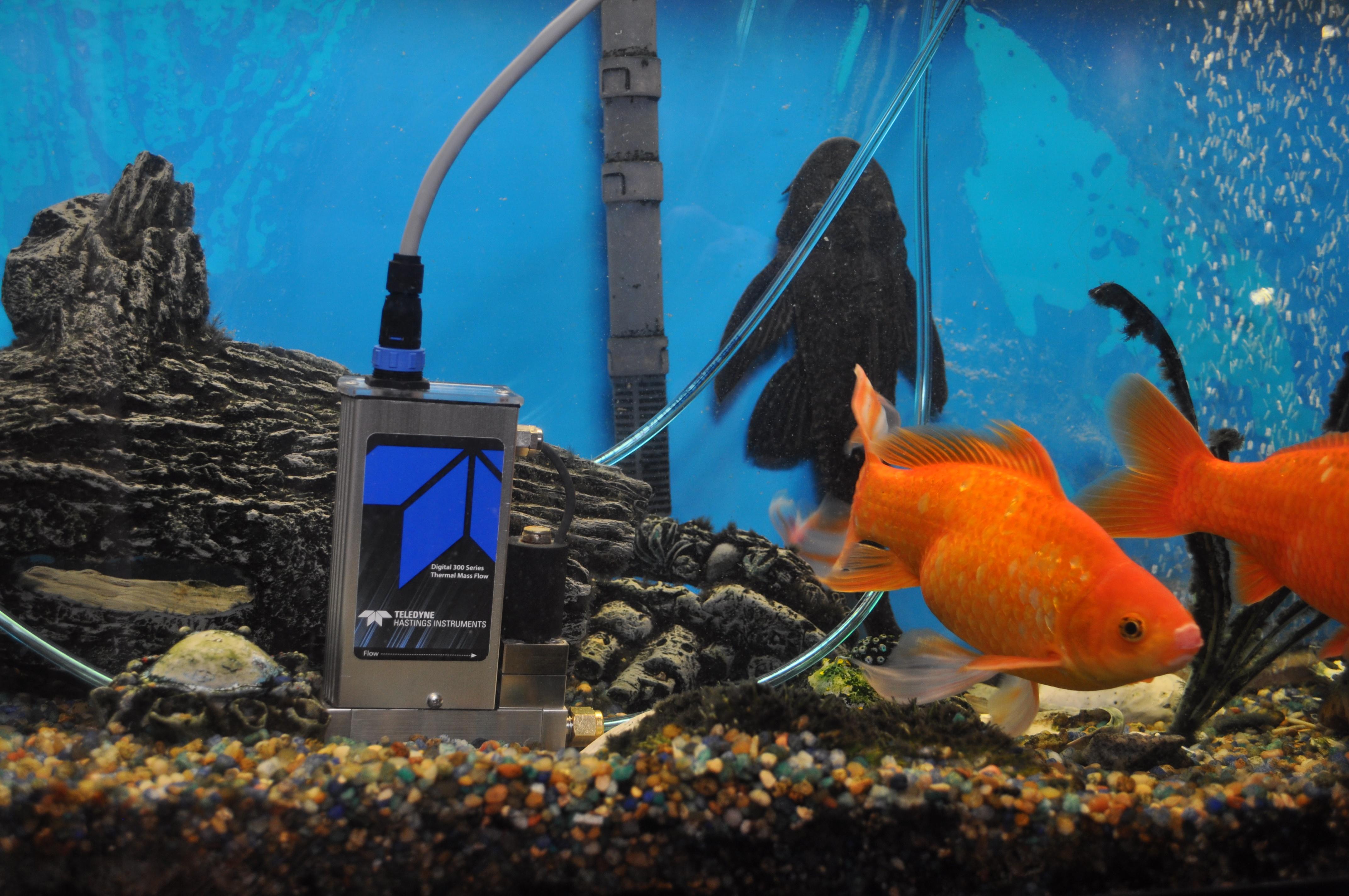 IP-67 in aquarium.jpg